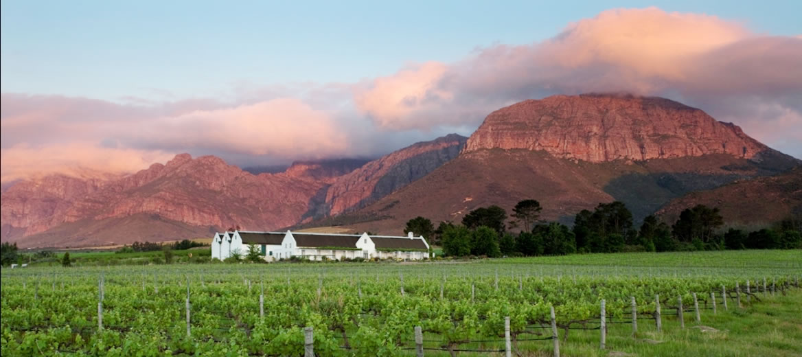 Cape Vineyards